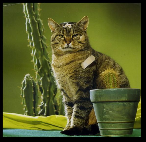 repotting-cat